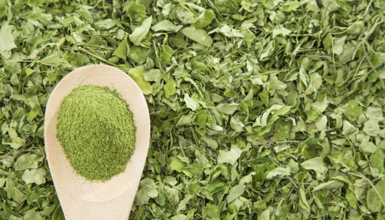 moringa beneficios